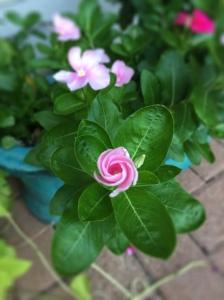 pink blog flower